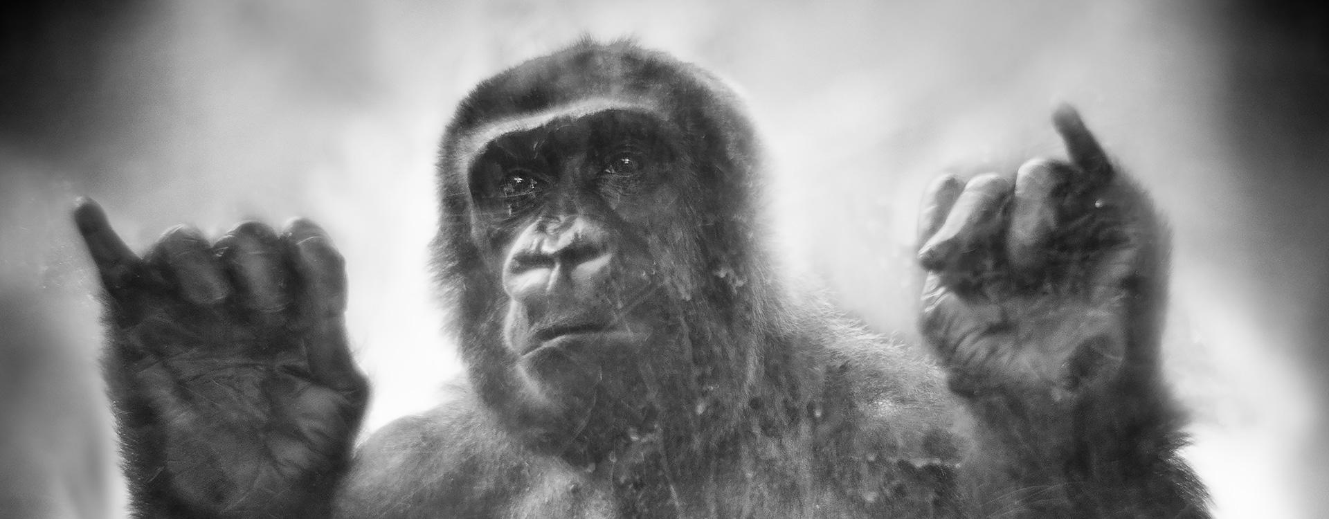 Grundrechte für Primaten – Website